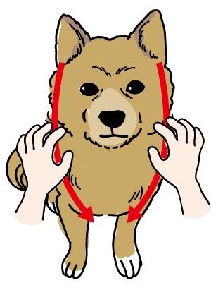 ペットマッサージ 犬の耳下腺