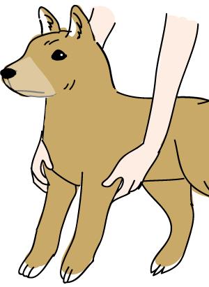 ペットマッサージ 犬の額