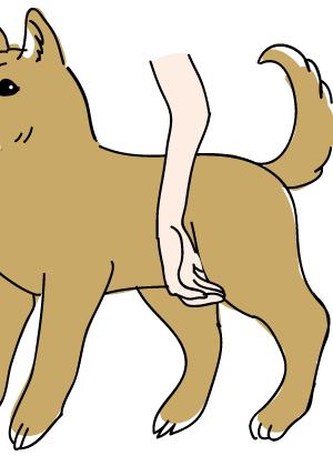 ペットマッサージ 犬の頬