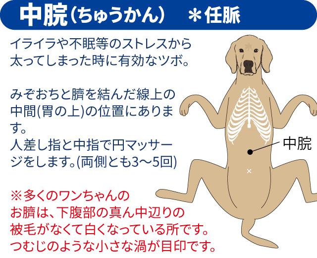 ペットマッサージ 犬のツボ03