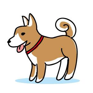 12歳以上の日本犬
