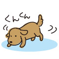 犬の散歩 においかぎ/イラスト