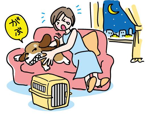 起こすと噛む犬