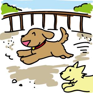 土のドッグランで走り回る犬