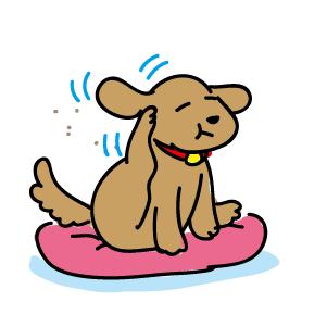 後ろ足で耳元を掻いている犬