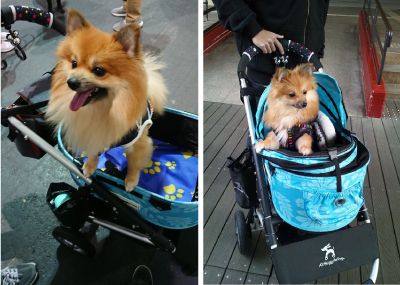AirBuggy for Dog ドーム2-SM