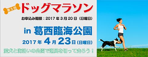 ドッグマラソン in 葛西臨海公園