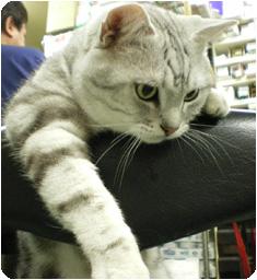 看板ネコ トラ
