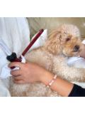 愛犬にやさしい びわの葉温灸スタータセット