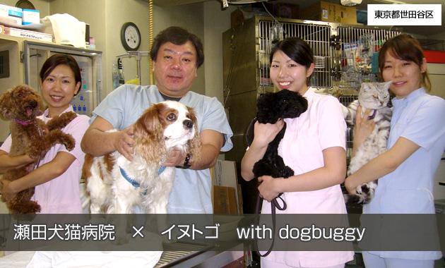 瀬田犬猫病院×イヌトゴ